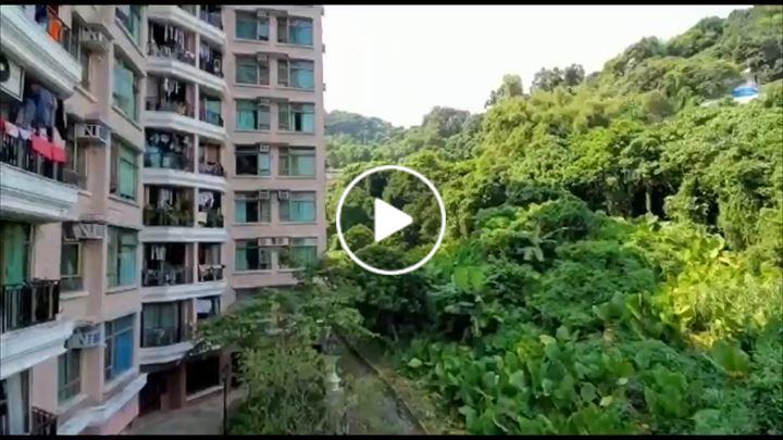 Steve Tsoi 蔡文亮